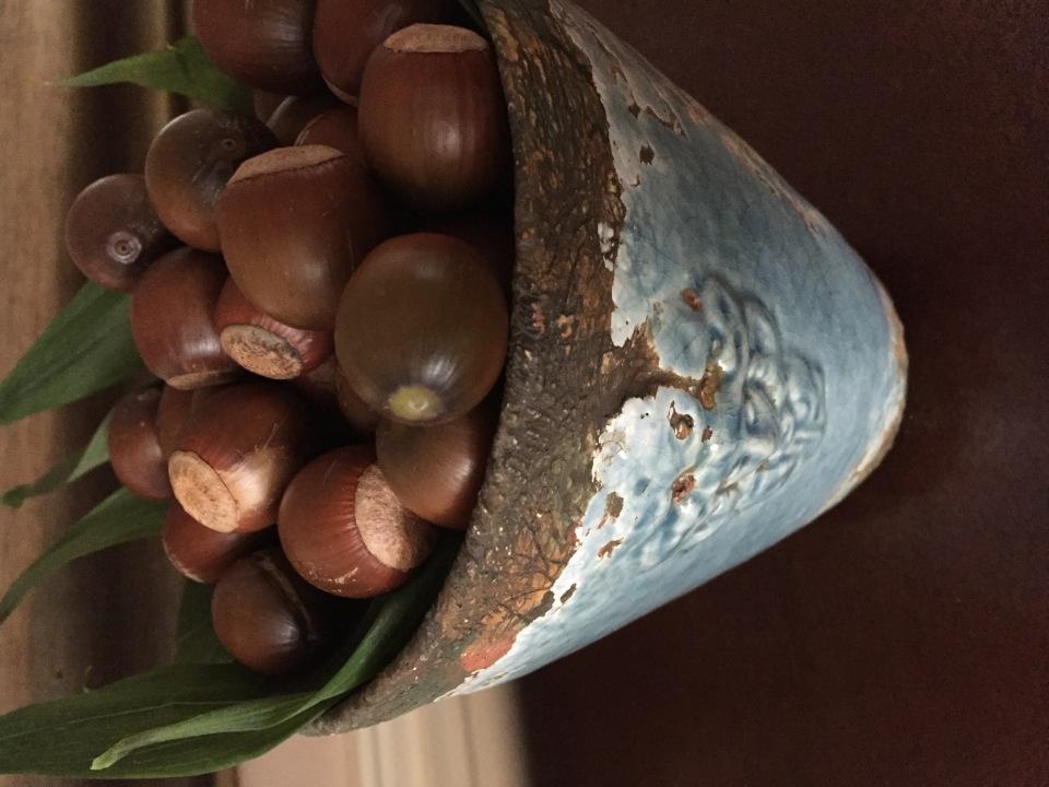 Acorns in a blue vase