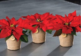 Set of 3 Poinsettia