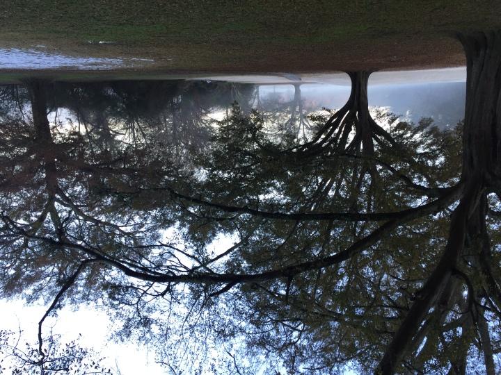 Sun through the oak trees
