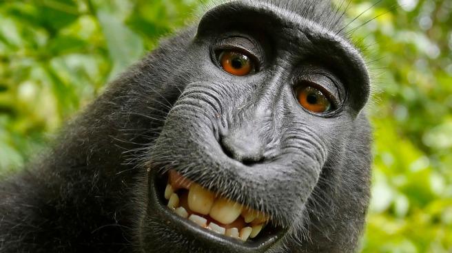 Selfie taking monkey