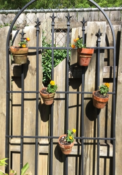 Nice sunny corner for the merigolds
